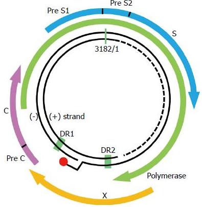 慢病毒感染细胞步骤