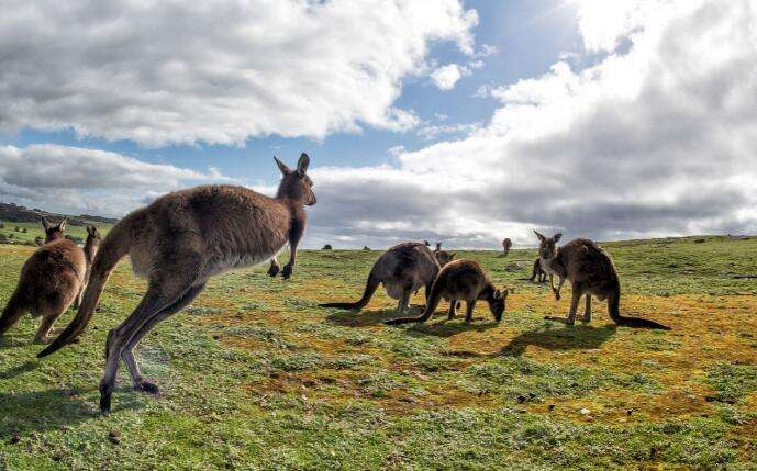 澳大利亚407签证和408签证申请对比说明
