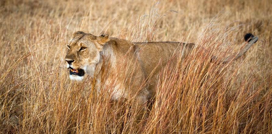 狂野非洲畅游肯尼亚 圆一个动物世界的梦